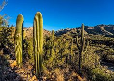 Catalina State Park sits at the base of the majestic Santa Catalina Mountains. The park is a haven for desert plants and wildlife and nearly 5,000 saguaros. (Photo via Instagram by@barnatanko)