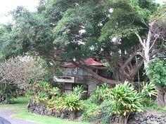 South Point Banyan Treehouse on the big island of Hawaii
