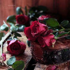 Flower Art, Art Photography, Roses, Bloom, Instagram Posts, Flowers, Plants, Art Floral, Fine Art Photography