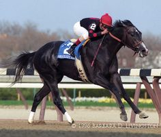 Unbridled's Song - DRF photo album by Barbara Livingston