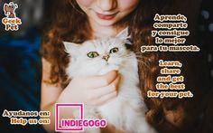 Share to help us :) Compártelo para ayudarnos :) https://www.indiegogo.com/projects/geekpet-comunidad-de-pet-lovers/#/ #mascota #pet #geek #startup #peru #petlover