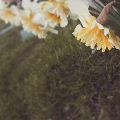#home #peace #nature #instanature #green #garden #trees #evergreen #petali #flower #power #flowerpower #star #white #sfumature #novellaorchidea #novella #orchidea #raccontierotici #racconti #ebook #ricardo #tronconi #eroticnovel #focus
