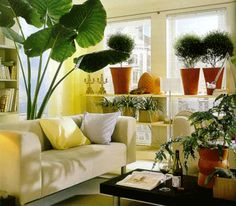 House Plants Decoration Ideas plants, indoor and house plants on pinterest