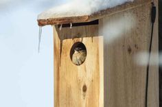 Learn how to attract a nesting bird by picking the right nest box for Carolina and House Wrens.