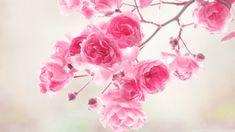 Image for Background Vintage Flower HD Wallpaper