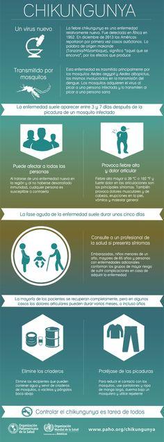 #Infografía sobre el #chikungunya: Conozca más sobre esta enfermedad transmitida por mosquitos, y cómo prevenirla.