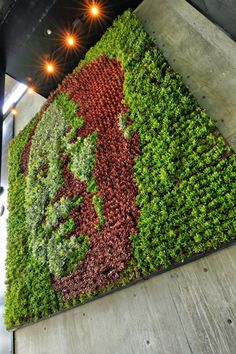 Underbelly Restaurant, San Diego CA