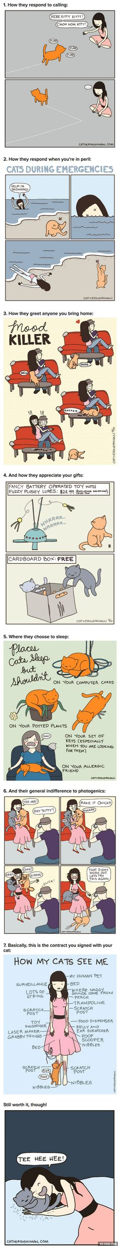 7 Least Helpful Cat Habits