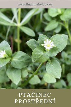 Herbalism, Garden, Plants, Herbal Medicine, Garten, Lawn And Garden, Gardens, Plant, Gardening