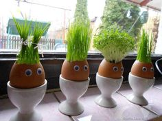 """If you love juicing wheat grass, why not try growing it in these creative """"planters"""" made from egg shells. Kids Crafts, Easter Crafts, Holiday Crafts, Easter Ideas, Thanksgiving Crafts, Easter Decor, Easter Gift, Egg Shell Planters, Diy Planters"""