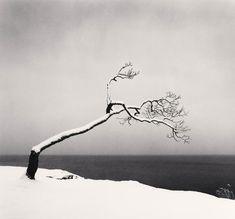 """Kussharo Lake Tree, Study Kotan, Hokkaido, Japan"" by photographer Michael Kenna. Minimal Photography, Tree Photography, Black And White Photography, Landscape Photography, Black And White Tree, Black And White Landscape, Festival Photo, Poesia Visual, Tree Study"