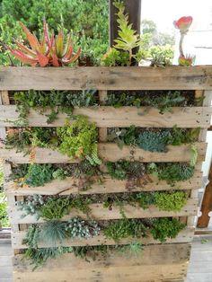 Vertical Pallet Garden, Herb Garden Pallet, Vertical Succulent Gardens, Vertical Garden Design, Succulent Wall Planter, Garden Planters, Diy Pallet Wall, Walled Garden, Plant Wall