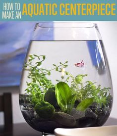 Learn how to make a small fish tank aquarium for your table! Check out this awesome aquatic centerpiece DIY project. You'll be amazed at how simple it is! Aquatic Table Centerpiece Project DIY Projects Craft Ideas & How To's for Home Decor with Vid Indoor Water Garden, Indoor Plants, Water Gardens, Unique Centerpieces, Table Centerpieces, Centerpiece Ideas, Terrarium Centerpiece, Easy Decorations, Plantas Indoor