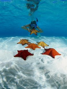 Snorkeller Looking at Cusion Sea Stars Near Marsh Harbour, Marsh Harbour, Bahamas    by Michael Lawrence