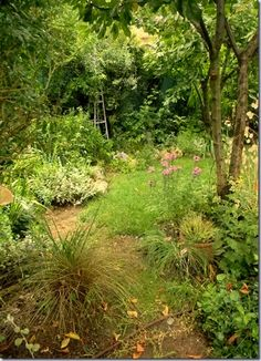 Ronald designed a beautiful garden for me. I get to look out of my office window and watch the birds and other animals come to the fountain to drink. It's a beautiful place to go and sit as well. (No this picture isn't it either.)