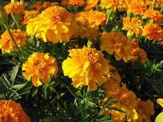 Bylinky pomôžu s ochranou proti škodcom - Pluska. Garden, Plants, Garten, Lawn And Garden, Gardens, Plant, Gardening, Outdoor, Yard