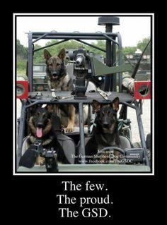 The Few, The proud, The GSD......(German Shepherd Dog)