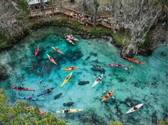 Three Sisters Springs, FL - I had the wonderful opportunity to kayak with manatees in a much less crowded leg of the crystal river in Weeki Wachee. So awesome!  http://photography.nationalgeographic.com/photography/photo-of-the-day/manatees-kayakers-nicklen/