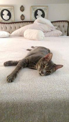 Zelda loves my grandmas bed. - http://cutecatshq.com/cats/zelda-loves-my-grandmas-bed/