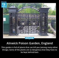 "The Alnwick Poison Garden in England. I have my own ""poison garden"" in my front yard. It has Angel's Trumpets & Devil's Trumpets."