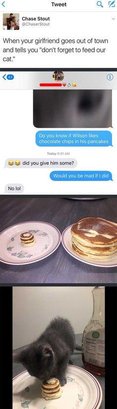 Man makes tiny pancakes for his kitten