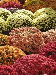 Mum's the word! It's Fall