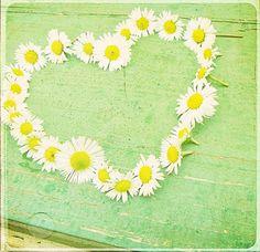 .daisy chain