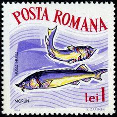 Beluga, Romania, 1964