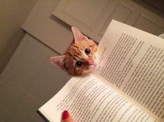 Afbeeldingsresultaat voor kat en boek