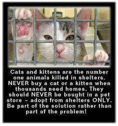 CaTS & KiTTeNS aRe THe NuMBeR oNe aNiMaLS KiLLeD iN SHeLTeRS.