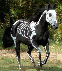 Skeleton Horse for Halloween Costume