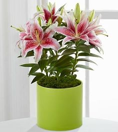 StarGazer DayLily Mother's Day Gift // Mom will love this! #mom #mother