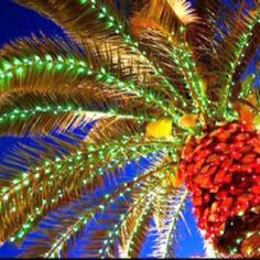 """...she thought of her parents and smiled...They'd strung gaudy colored lights on the palm tree in the front yard, and her father had danced around in a Hawaiian shirt and flip-flops singing Jingle Bell Rock.  Quote from """"Merry Humbug Christmas"""" by Sandra D. Bricker #Merryhumbug"""