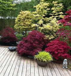Zen Garden Design, Plants, Shade Garden, Small Japanese Garden, Outdoor Gardens Design, Backyard Landscaping Designs, Outdoor Gardens, Japanese Garden Landscape, Garden Planning