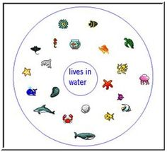 Circle Map of Things That Live in Water