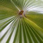 Foto tips - gratis fotografie tips voor professionele fotografie Wilma Karels