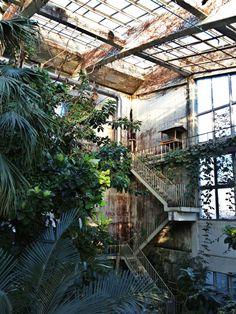 abandoned botanic garden in kichijo-ji, japan #imian
