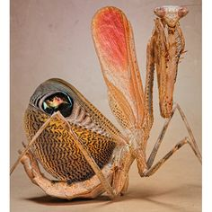 Aliens on Earth: macro pictures of praying mantises and bugs by Igor Siwanowicz - Telegraph