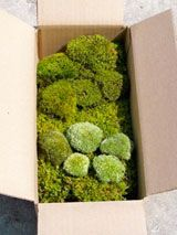 Mail-order moss... I had no idea this even existed, and it may be a lost cause in Southern CA but I like it