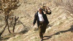 Firewood (Kurdistan, Iraq) | by kezwan