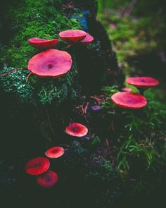 "maureen2musings:  ""  Missing the dark mossy forest floor with all its wonders   @voiceofnature  """