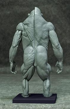 Provide professionals and students alike with afordable, Desktop anatomy models of high quality and accuracy, at an affordable price of high quality and accura Character Modeling, Character Drawing, Character Illustration, Character Design, Animal Statues, Animal Sculptures, Sculpture Art, Silverback Gorilla, Chimpanzee