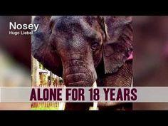No Elephant Deserves to Be Alone - YouTube