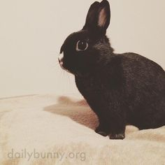 Bunny suddenly remembers there are fresh carrots in the crisper - December 30, 2015
