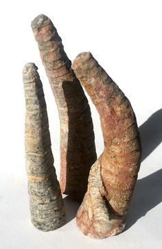 fossils - Orthoceras, a straight nautiloid from the Ordovicium (ca. 480-420 mya)