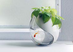 mini aquaponics.