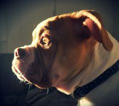 Loverbulls Fiona