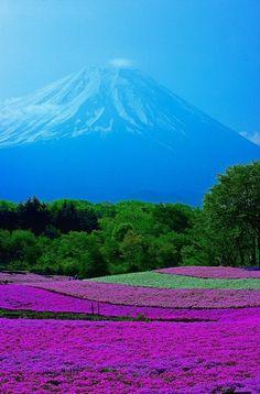 春富士-Mt. Fuji in spring