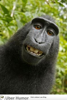 Not my usually photo- I just had to pin this-   Photographer left his camera unattended for a bit at a national park in Indonesia and a crested black macaque monkey figured out how to operate the camera