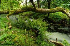 Fern in the forest. by Krzysztof Szwab on 500px